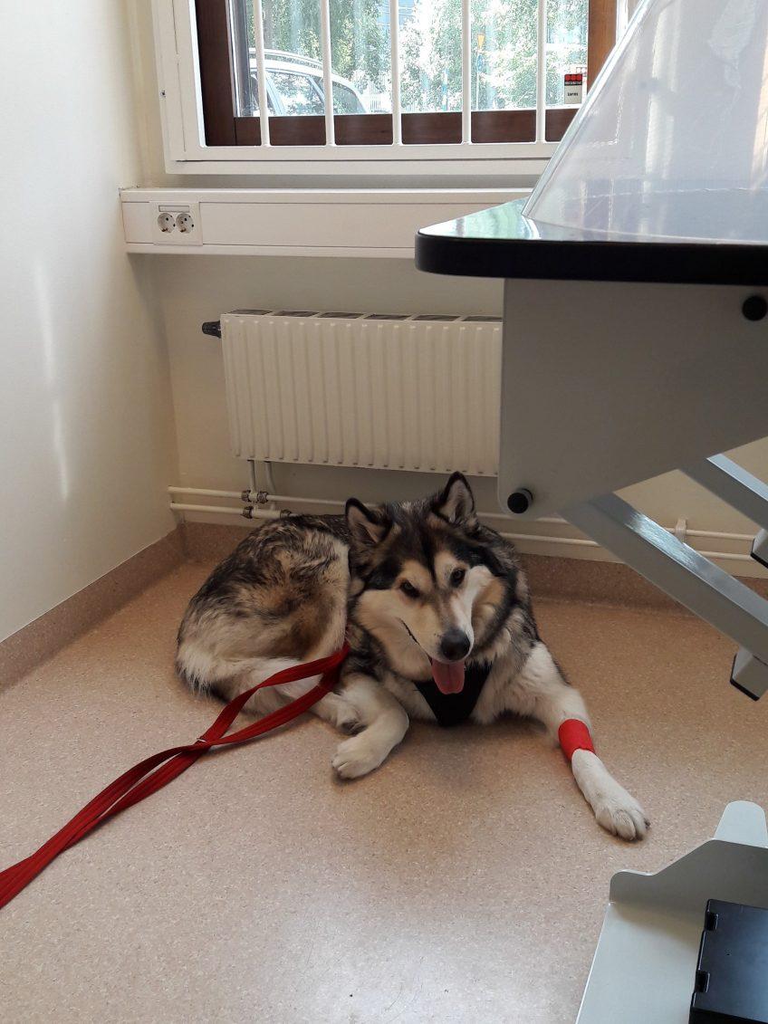 IDhund och sjukstuga