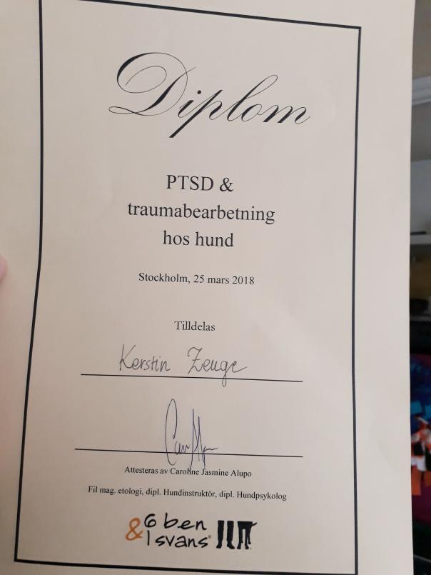 PTSD och traumabehandling hos hund